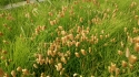 草ミノムシ