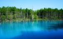2012-6-27美瑛青い池 078